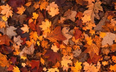 H – wie Herbst.